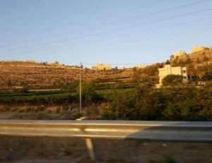 (Photo: Grapes growing on the outskirts of Hebron, as they did since Biblical times. Archaeologists believe the agricultural terracing may have been built by the Israelites and later up-kept by various inhabitants.)