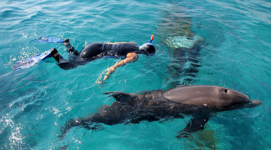 Swim with Dolphins in Eilat
